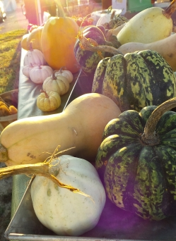Winter squash and pumpkins that actually made it to market