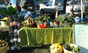 Farmers Market Set up